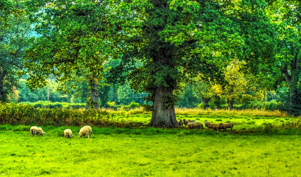 Landscape2_small